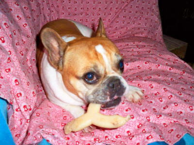 BLUE Bones Regular Chew Dog Bone