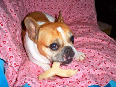 BLUE Bones Regular Chew Dog Bone