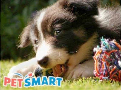 Get Your Validation Code To Redeem The Offer On The Receipt Through The PetSmart Adoption Survey