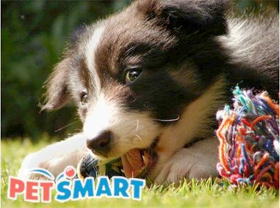 www.petsmartadoptionsurvey.com Get Your Validation Code To Redeem A Free Offer Through The PetSmart Charities Adoption Survey