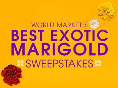 Win Travel Packages & Gift Cards In World Market's Best Exotic Marigold Sweepstakes