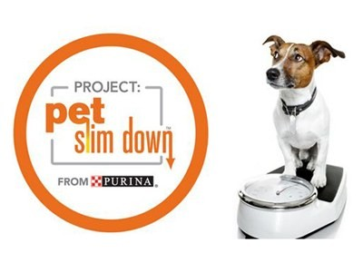 Win Jawbone Up Fitness Trackers For Your Pets In Project Pet Slim Down Sweepstakes