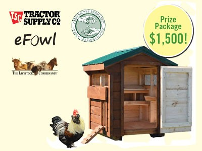 www.motherearthnews.com/chicken-starter-kit-2015 - Win Multiple Prizes Valued At $1,500 From Heritage Chicken Starter Kit Giveaway Sweepstakes