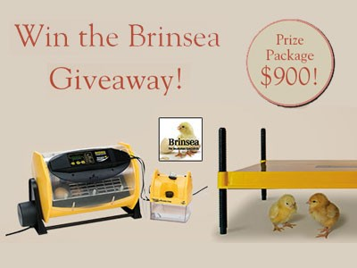 Enter GRIT Brinsea Giveaway To Win EcoGlow Chick Brooder And Octagon Advance Digital Egg Incubator